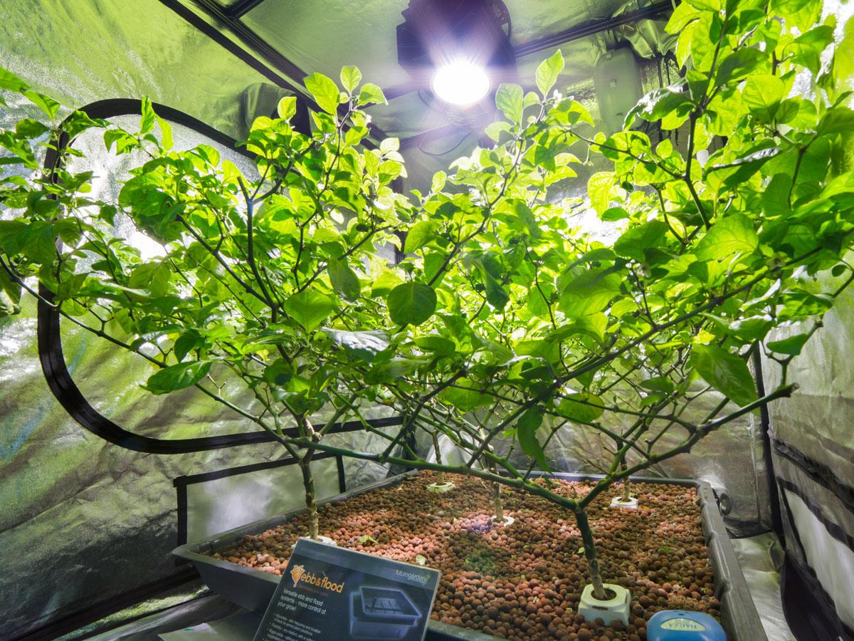 Future Garden Chelmsford CX Horticulture UK Enhanced Retailer