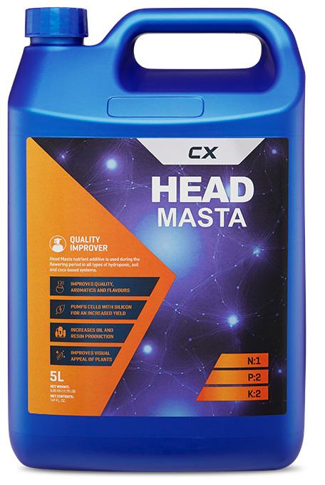 Head Masta