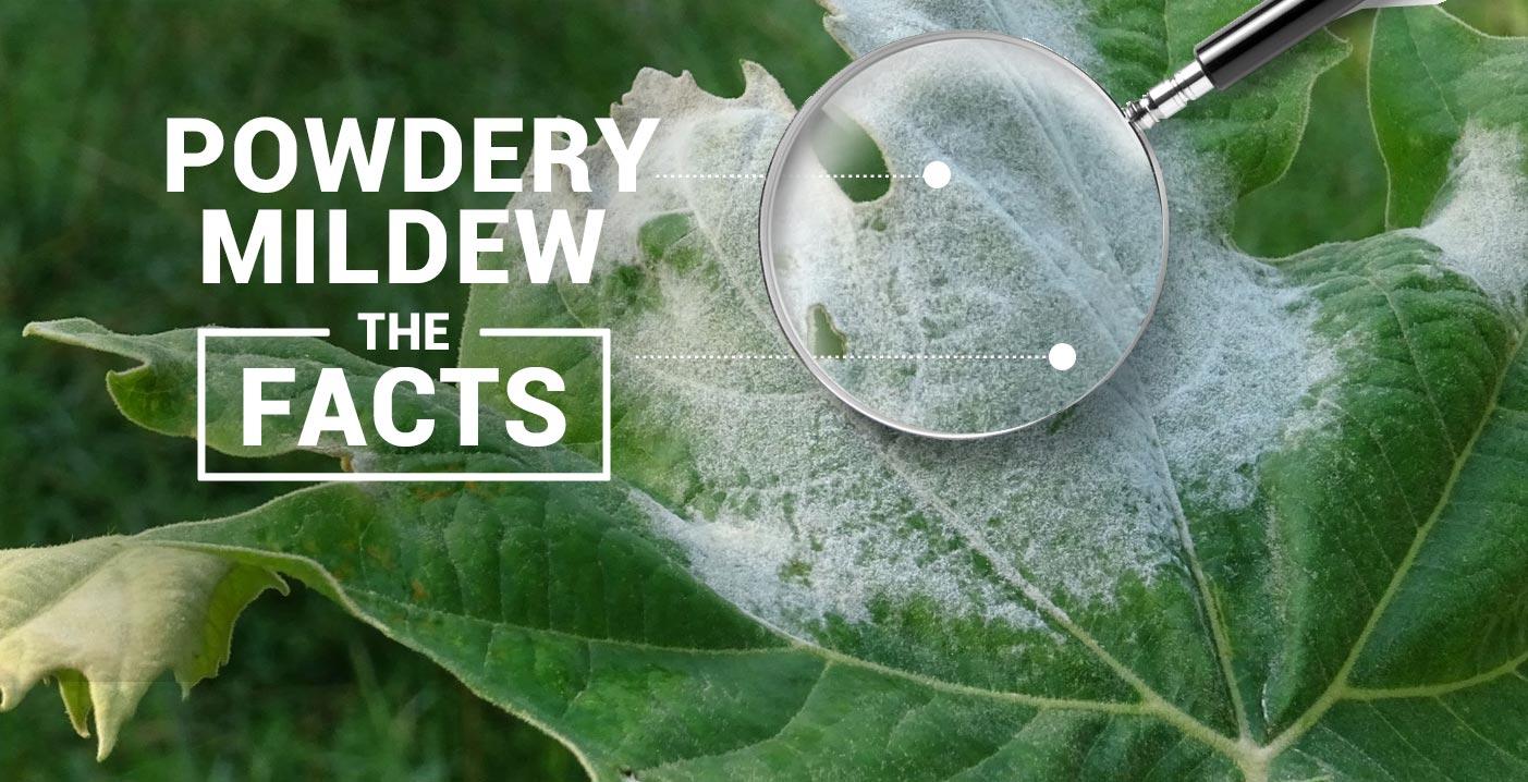 Powdery Mildew Header
