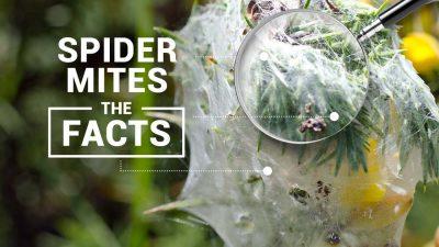 Spider Mites Blog