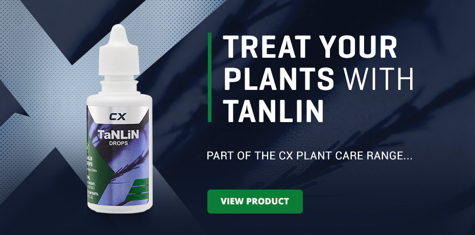 Fight Fungus Gnats with TanLiN Hydroponics Additive from CX Horticulture UK