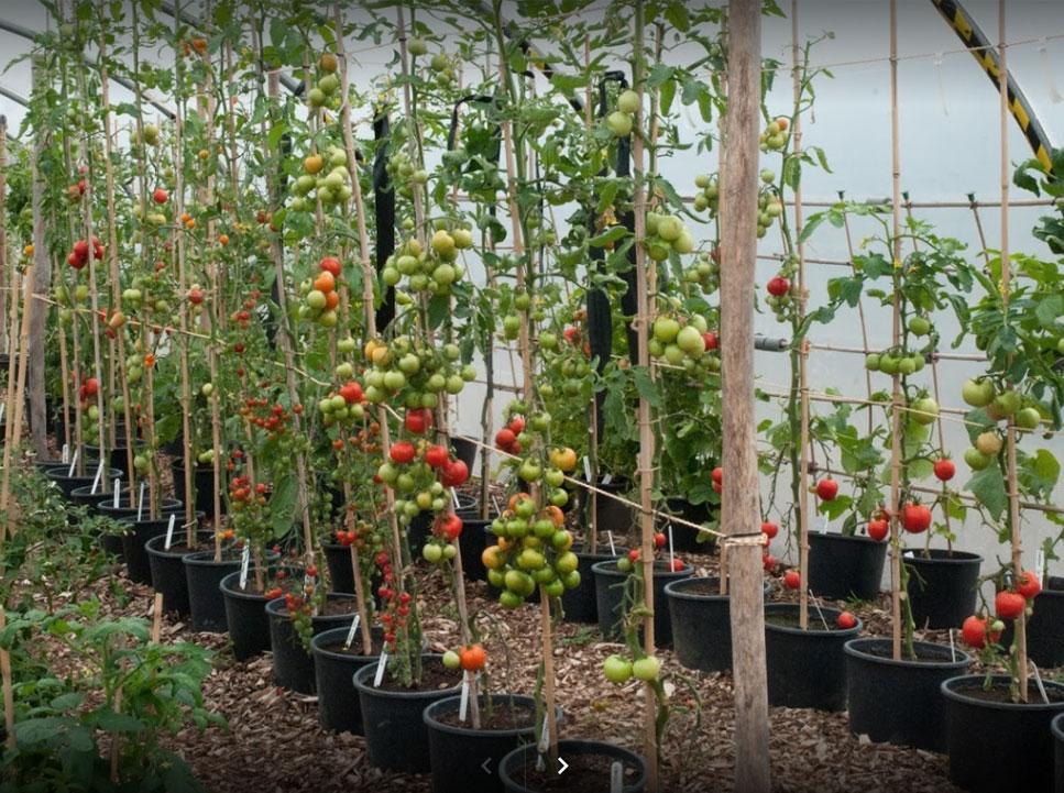 Grow It Yourself Chichester CX Horticulture UK Enhanced Retailer